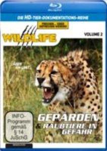 Geparden & Raubtiere in Gefahr