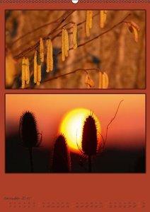 Cross, M: Farben der Natur / AT-Version (Wandkalender 2015 D