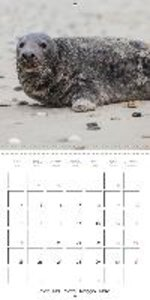 Seals on Helgoland Dune (Wall Calendar 2015 300 × 300 mm Square)