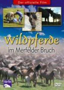 Wildpferde im Merfelder Bruch