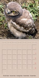 Owls . Eyes of the Night (Wall Calendar 2015 300 × 300 mm Square