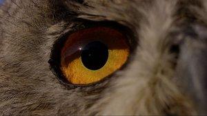 Terra X-Schneller als das Auge
