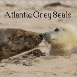 Atlantic Grey Seals (Wall Calendar 2015 300 × 300 mm Square)