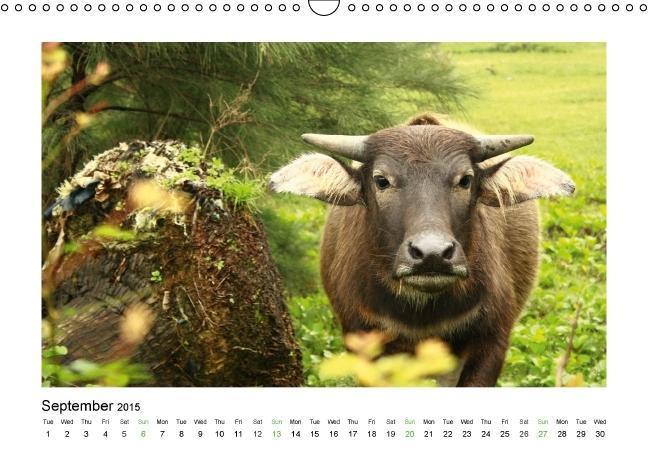 XIN CHÀO VIETNAM (Wall Calendar 2015 DIN A3 Landscape) - zum Schließen ins Bild klicken