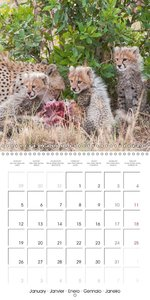 Emotional Moments: African Wildlife Part II. (Wall Calendar 2015