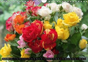 Kruse, G: Rosen, Rosen ... arrangiert und am Strauch (Wandka