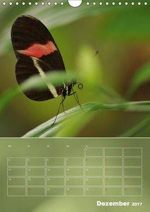 Zarte Schönheiten Schmetterlinge aus den Tropen (AT-Version)