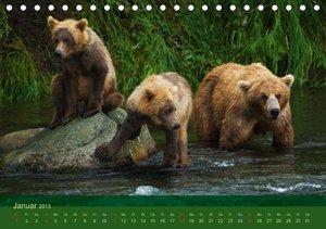 Steinwald, M: Bärenkalender 2015 CH-Version (Tischkalender 2