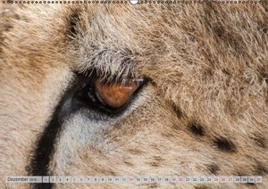 Gerlach GDT, I: Emotionale Momente: Geparden (Wandkalender 2