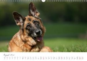 German Shepherd / UK-Version (Wall Calendar 2015 DIN A3 Landscap