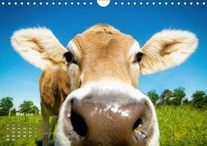Kuh-Idylle (Wandkalender 2016 DIN A4 quer)