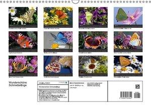 Reupert, L: Wunderschöne Schmetterlinge (Wandkalender 2015 D