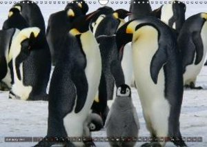 Penguins Unique and amazing birds (Wall Calendar 2015 DIN A3 Lan