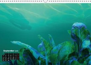 Consequence of Diving (Wall Calendar 2015 DIN A3 Landscape)