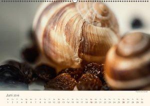 Food verkehrt (Wandkalender 2016 DIN A2 quer)