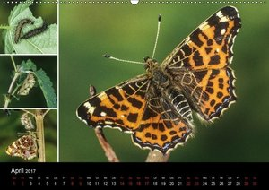 Schmetterlinge - Wunder der Verwandlung (Wandkalender 2017 DIN A