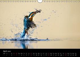 British Wildlife 2015 (Wall Calendar 2015 DIN A4 Landscape) - zum Schließen ins Bild klicken