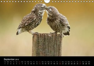 British Wildlife 2015 (Wall Calendar 2015 DIN A4 Landscape)