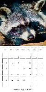 European Wildlife: At home in field and forest (Wall Calendar 20