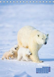 Eiszeit für Eisbären (Tischkalender 2016 DIN A5 hoch)