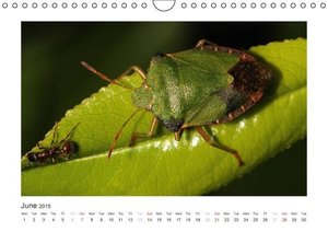 Macros from the World of Insects (Wall Calendar 2015 DIN A4 Land
