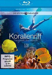 Korallenriff-Traumwelt Des Meeres