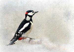 Vogelwelt im Chemnitzer Zeisigwald (Posterbuch DIN A2 quer)