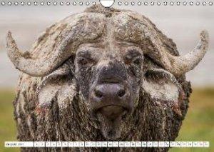 Gerlach, I: Emotional Moments: Buffalo UK Version