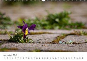 Einfach nur Natur (Wandkalender 2017 DIN A2 quer)