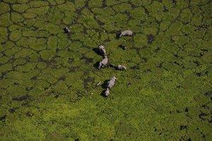 Erde von Oben 1,die-Artenvielfalt,Erd