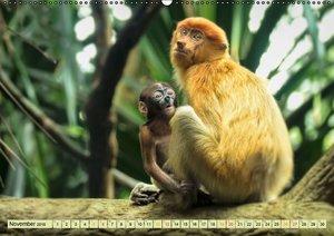 Affen - Affenkinder (Wandkalender 2016 DIN A2 quer)
