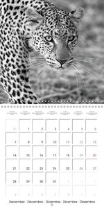 AFRICA wildlife in black and white (Wall Calendar 2015 300 × 300