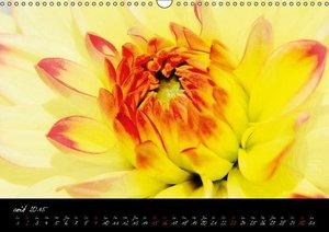Intimités florales (Calendrier mural 2015 DIN A3 horizontal)