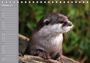 Otter. Frech, laut und clever