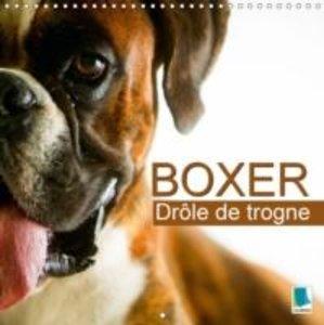 Calvendo: Boxer: Drole de Trogne