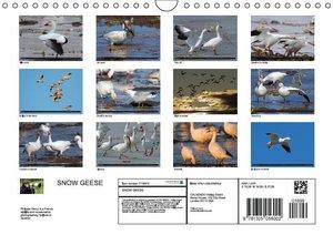 SNOW GEESE (Wall Calendar 2016 DIN A4 Landscape)