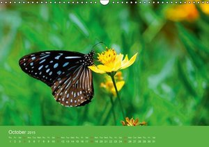 Close to the ground (Wall Calendar 2015 DIN A3 Landscape)