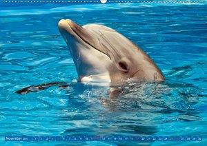 Delfine - elegant und intelligent