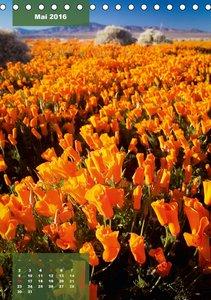 Blütenkraft - Farbenrausch in der Wiese (Tischkalender 2016 DIN