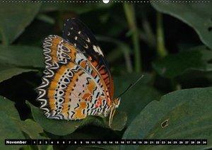 Tropische Schmetterlinge (Wandkalender immerwährend DIN A2 quer)
