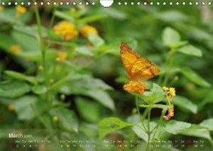 Schumann, B: Delicate Beauties Exotic Butterflies / UK-Versi