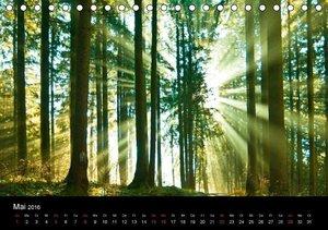 Bäume sind Träume (Tischkalender 2016 DIN A5 quer)