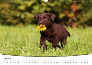 Welpen - Puppies (Wandkalender 2016 DIN A3 quer)