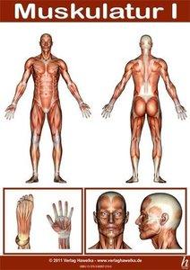 Anatomie Poster - Muskulatur I - DIN A3