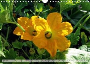 Happy Orange (Wall Calendar 2015 DIN A4 Landscape)