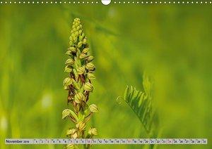 Orchideenwiese 2019 (Wandkalender 2019 DIN A3 quer)