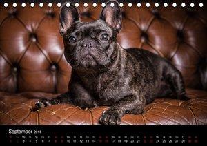 French Bulldog (Tischkalender 2018 DIN A5 quer)