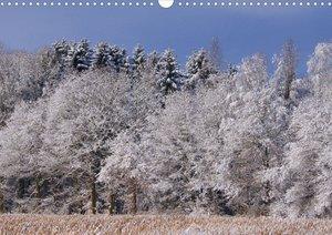 Das Leben im Wald (Posterbuch DIN A4 quer)