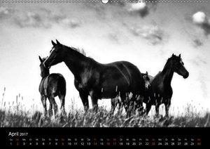 Pferde 2017 Wild Thing