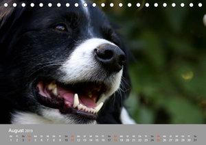 Graue Schnuten - Hunde in den besten Jahren (Tischkalender 2019